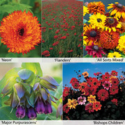 Annual Flower Border Seed Collection (Medium) - 5 varieties - 1 packet of each (2330 seeds in total)