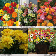 Annual Flower Border Seed Collection (Short) - 5 varieties - 1 packet of each (340 seeds in total)