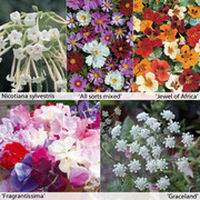 Annual Flower Border Seed Collection - 15 varieties - 1 packet of each (4930 seeds in total)