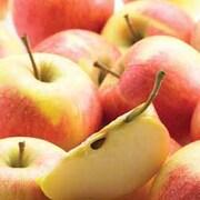 Apple 'Croquella' - 1 root wrap apple tree
