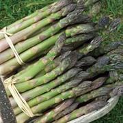 Asparagus officinalis 'Martha Washington' - 1 packet (50 seeds)