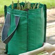 Asparagus officinalis 'Planter Collection' (Spring/Autumn Planting) - 1 asparagus collection