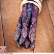 Asparagus officinalis 'Pacific Purple' (Spring/Autumn Planting) - 10 asparagus crowns