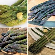 Asparagus officinalis Collection (Spring/Autumn Planting) - 20 asparagus crowns - 5 of each variety