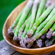 Asparagus officinalis 'Pacific Challenger' (Spring/Autumn Planting) - 25 asparagus crowns