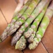 Asparagus officinalis 'Guelph Millennium' (Spring/Autumn Planting) - 10 asparagus crowns