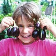 Aubergine 'Ophelia' F1 Hybrid - 1 packet (6 aubergine seeds)