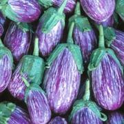 Aubergine 'Listada de Gandia' - 1 packet (40 aubergine seeds)