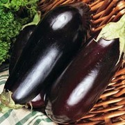 Aubergine 'Black Enorma' F1 Hybrid - 1 packet (40 aubergine seeds)