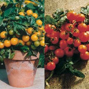 Tomato 'Balconi' Collection - 2 packets - 1 of each variety (40 tomato seeds in total)