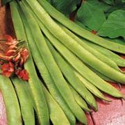 Runner Bean 'Scarlet Emperor' - 1 packet (50 runner bean seeds)