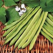 Runner Bean 'White Apollo' - 1 packet (35 runner bean seeds)