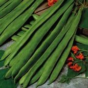 Runner Bean 'Scarlet Empire' - 1 packet (35 runner bean seeds)
