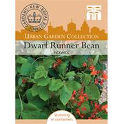 Runner Bean 'Pickwick' (Dwarf) - 1 packet (12 runner bean seeds)