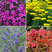Best Value Border Collection - 10 x 1 litre potted plants