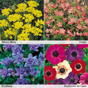 Spring Flowering Bulb Collection - 100 spring bulbs (25 of each variety)