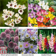 Summer Flowering Bulb Collection - 425 spring bulbs