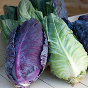 Cabbage 'Colour Dual Mix' (Autumn/Winter) - 1 packet (60 cabbage seeds)