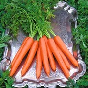 Carrot 'Tendersnax' F1 Hybrid - 1 packet (250 carrot seeds)