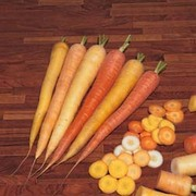 Carrot 'Rainbow' F1 Hybrid - 1 packet (300 carrot seeds)