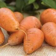 Carrot 'Caracas' - 1 packet (500 carrot seeds)