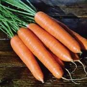 Carrot 'Eskimo' F1 Hybrid - 1 packet (450 carrot seeds)