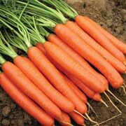 Carrot 'Romance' F1 Hybrid - 1 packet (400 carrot seeds)