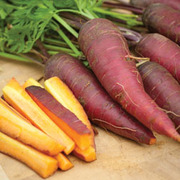 Carrot 'Cosmic Purple' - 1 packet (500 carrot seeds)