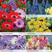 Bumper Spring Bulb Collection - 425 mixed bulbs