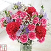 Cranberry Crush Bouquet - Gift - 13 stem bouquet