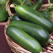 Cucumber 'Cucino' F1 Hybrid - 1 packet (4 cucumber seeds)