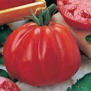 Tomato 'Cuore di Bue' - Vita Sementi® Italian Seeds - 1 packet (390 tomato seeds)
