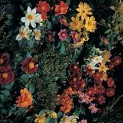 Dahlia variabilis 'Bambino Mixed' - 1 packet (50 dahlia seeds)