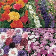 Easy Annuals Collection - 1 packet