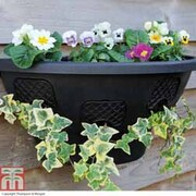 Easy Fill Hanging Wall Planter - 1 wall planter