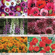 1st Year Flowering Perennial Collection - 12 Powerliner plug plants - 2 of each variety