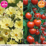 Flower & Vegetable 2016 Collection - 2 packets - 1 of each variety (35 seeds in total)