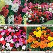 Garden Ready Bedding Collection - 120 garden ready plants - 30 of each variety