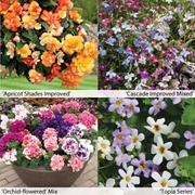 Garden Ready Basket Collection - 120 garden ready plants - 30 of each variety