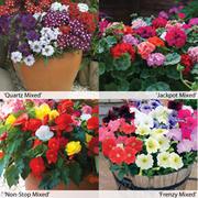 Garden Ready Container Collection - 120 garden ready plants - 30 of each variety