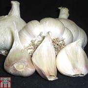 Garlic 'Picardy Wight' (Spring Planting) - 2 garlic bulbs