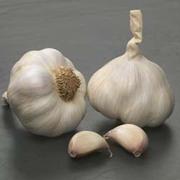 Garlic 'Solent Wight' (Spring/Autumn Planting) - 2 large garlic bulbs
