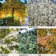 Native Hedging Collection - 25 bare root hedging plants