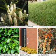 Coastal Hedging Collection - 25 bare root hedging plants