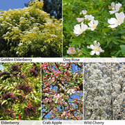 Wildlife Hedging Collection - 25 bare root hedging plants