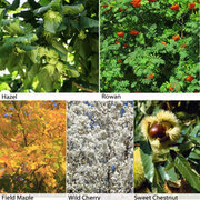 Autumn Shades Hedging Collection - 25 bare root hedging plants