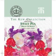 Sweet Pea 'Bright and Breezy' - Kew Collection Seeds - 1 packet (25 sweet pea seeds)