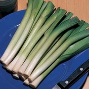 Leek 'King Richard' - 1 packet (125 leek seeds)