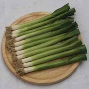 Leek 'Nipper' - 1 packet (250 leek seeds)