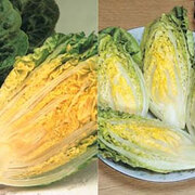 Lettuce 'Gem Collection' (Cos) - 2 packets - 1 of each variety (1400 lettuce seeds in total)
